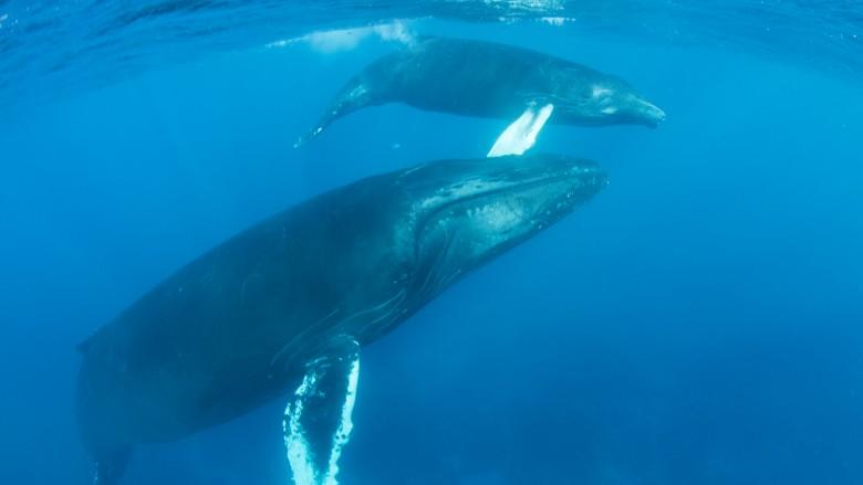 Strangest things people have found underwater 107