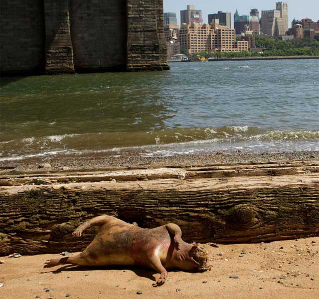 Mystery creature washes up in New York 86
