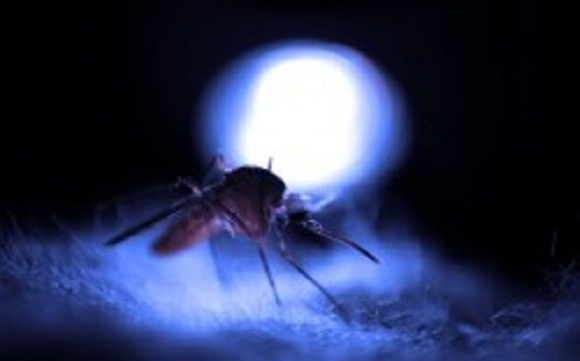 Genetically Modified Mosquitoes Released in the Millions with No Risk Assessment 1