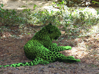 Green Lion...or Green Leopard? On the track of Heuvelmans's unknown mystery cat 10