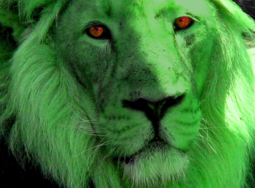 Green Lion...or Green Leopard? On the track of Heuvelmans's unknown mystery cat 48