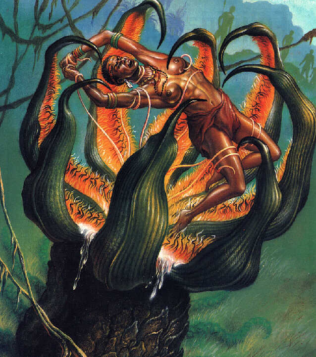 THE MADAGASCAN MAN-EATING TREE - MORE THAN JUST A MONSTROUS MYTH? 19