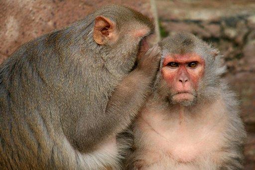 Animals Are Moral Creatures, Scientist Argues 16