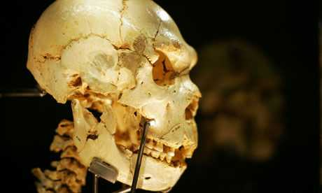 Scientists accused of distorting theory of human evolution 97