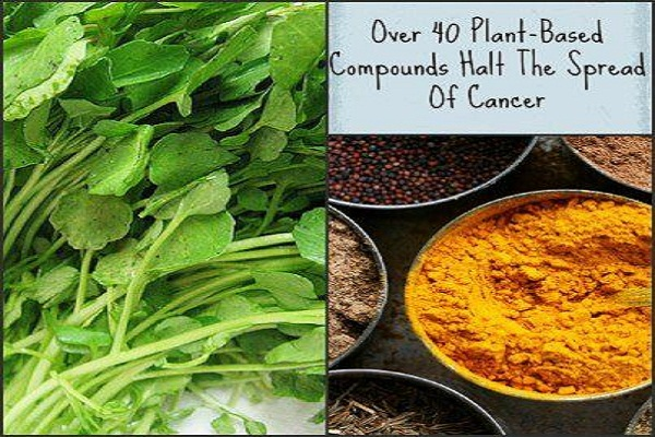 Over 40 Plant-Based Compounds Halt the Spread of Cancer 14