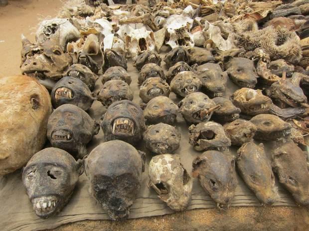 Voodoo Fetish Market, Africa's Voodoo Supermarket  99