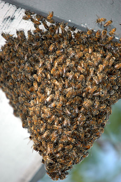 """'Honey Laundering: An International Scandal"""" 11"""