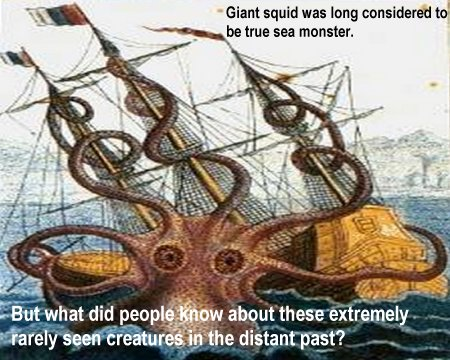 Legend Surrounds The Giant Squid - One Of The Most Extraordinary Animals Living On Our Planet  98