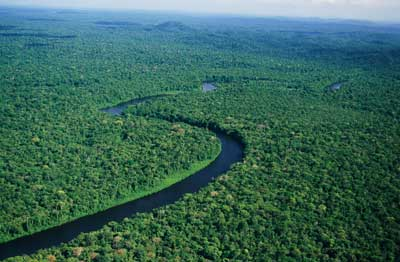 Rainforests Adapting to Global Warming 120