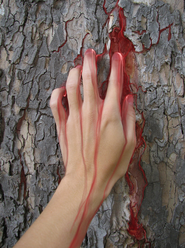 Bleeding Trees: An Apocalyptic Sign? The Apocalypse Of Ezra Predicted It 21