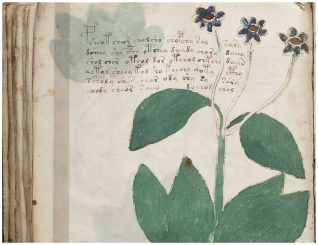 New signs of language surface in mystery Voynich text 95