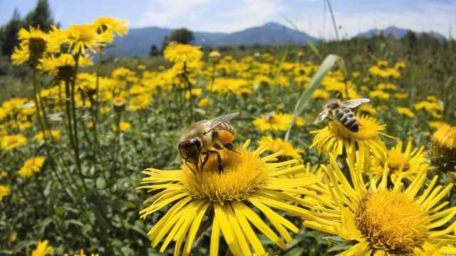 Again And Again: 37 Million Bees Found Dead 91