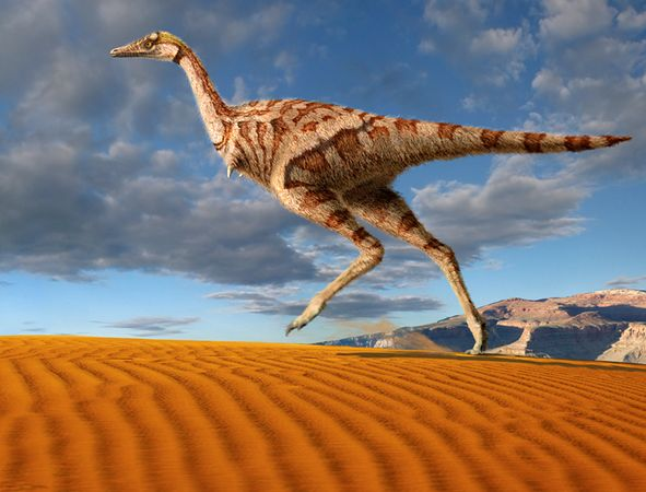 """Australian """"Theropod"""" Sightings and the Relict Dromornithid Hypothesis  92"""