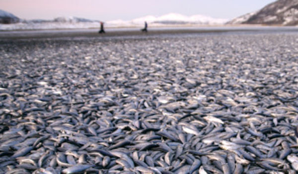 Why Are Millions Of Fish Suddenly Dying In Mass Death Events All Over The Planet? 23