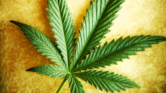 Government Report Offers MORE Evidence Cannabis is a Wonder Drug for Cancer and Good Health 93