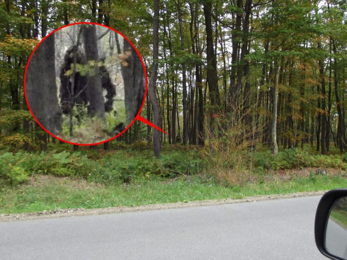 Does this image show TWO Bigfoot creatures? Woodsman photographed 'moving beast' in Pennsylvania... but there is no sign of it now 21