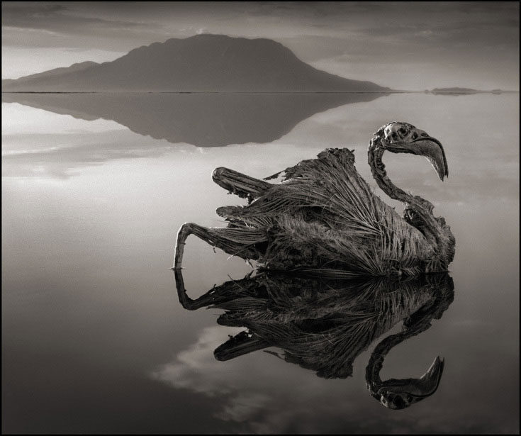 Any Animal That Touches This Lethal Lake Turns to Stone 86