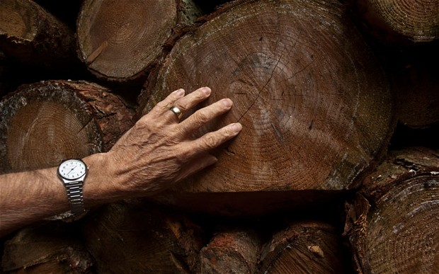 Bad luck really can be reversed by touching wood ritual, say scientists 1