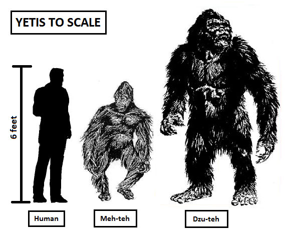 Yetis, Polar Bears, Snowmen, Snow Bears, Dzu-Tehs, and Jumping To Abominable Conclusions 17