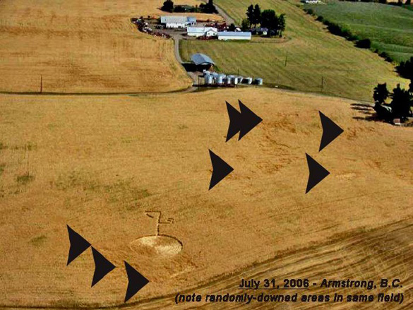July 31, 2010 Armstrong, B.C. crop circle in barley (harvested rows were winter wheat, cut on July 27). Note areas of randomly-downed crop in barley field (arrows), regularly observed in conjunction with genuine circles. Photo: Clarence Glaicar, Aug. 2nd.