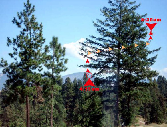 View from Mrs. Langin's window, looking East toward Black Mountain, approx. 8 miles away. Red arrows indicate locations where object was first & finally observed. Orange arrows show UFO's movement behind the tree. Photo: Sandra Langin.