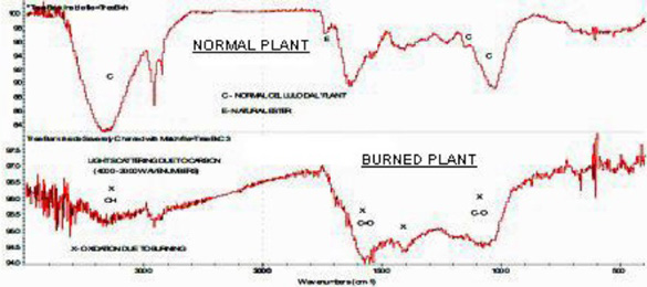 FT-IR graphs showing carbonization of 2010 burned Dutch crop circle plants. Source: Frontier Analysis, Ltd.
