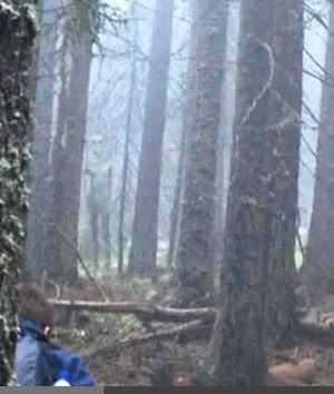Tall Grey Alien Photographed By Hikers In Bulgarian Forest 11