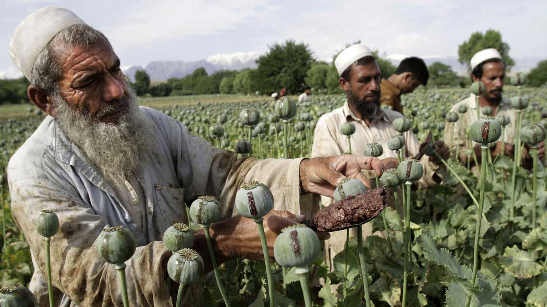 Afghanistan Opium Crops at All-Time High Despite Western Intervention 89