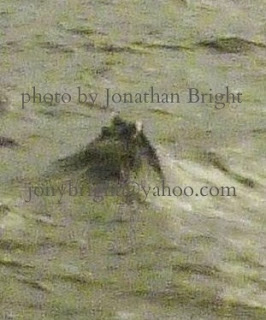 Analysis of the Jonathan Bright Picture 29