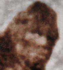 Why Can't We Find Bigfoot? 4