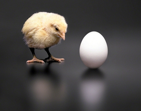 The Paradox of the Chicken or the Egg: Which came first, the chicken or the egg?