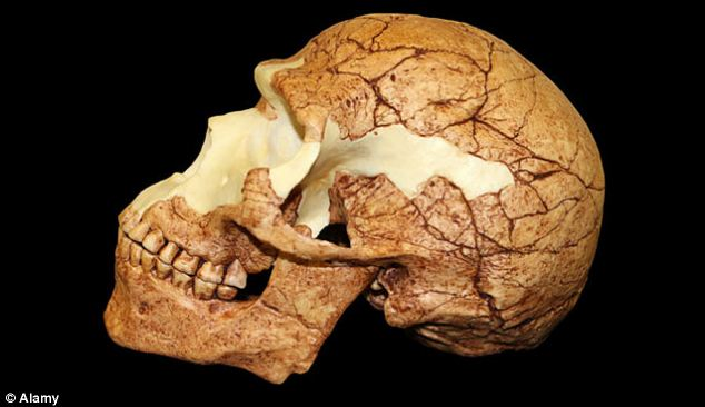 Fossilis uncovered in geographical regions and archaeological time zones they don't belong to have fuelled creationist arguments. Some of these have yielded new information about our ancestry. Others have been revealed as fakes. Recently, a human skull unearthed in Sussex was found to be a forgery