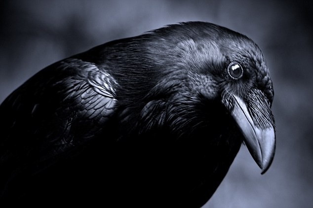 Could crows hold the secret to understanding ALIENS? 93