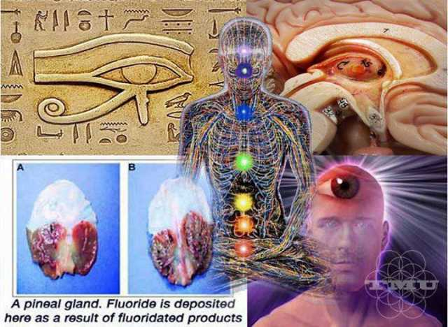 Proof That The Pineal Gland Is Literally A 3rd Eye 12