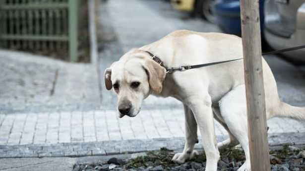 Dogs poop in line with Earth's magnetic field, says study 93