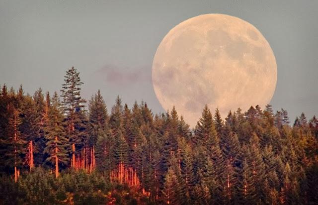 web-Harvest-Moon
