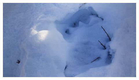 Yeti footprints-2