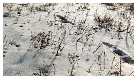 Yeti footprints-1