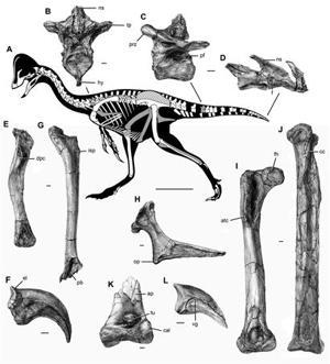 The new oviraptorosaurian dinosaur species Anzu wyliei…