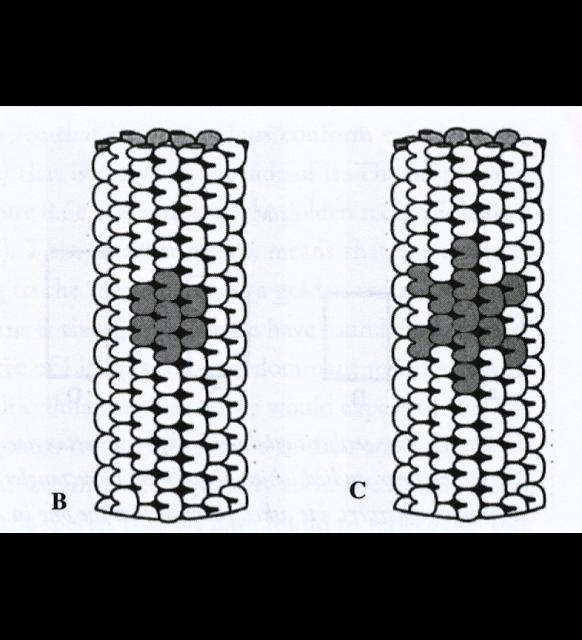 Centriole-3