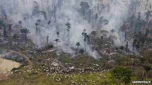 The livestock sector is among the top contributors to our current environmental crisis. We are loosing acres of ancient rain forest every day to create more room for livestock grazing.