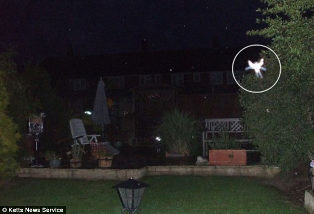 In 2009, Phyllis Bacon, 55, believed she took a photo of a fairy at the bottom of her garden in New Addington, near Croydon in South London