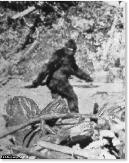 The myth and mystery behind Australia's bush monster the Yowie 16