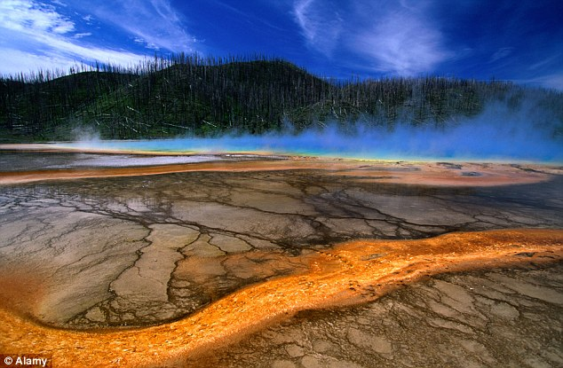 Animals Fleeing Yellowstone Spark Fears of Supervolcano Eruption 94