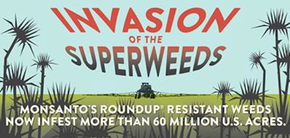 How Monsanto Created Over 60 Million Acres of Superweeds That Have Wrecked The Environment 1