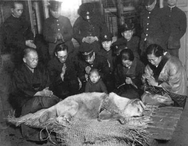 Hachiko before his burial in 1935