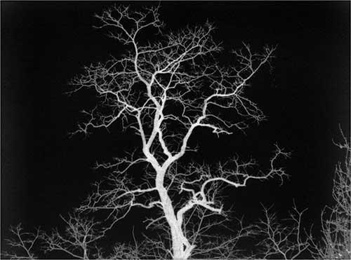 Dendrite-tree