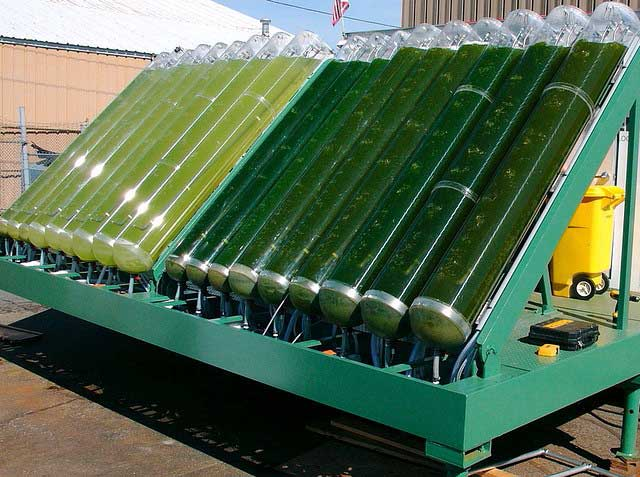 Alt. Fuel: Scientists Turn Algae Into Usable Fuel In Less Than An Hour 87
