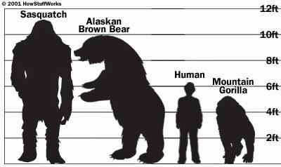 Alaska Sasquatch Encounters 25