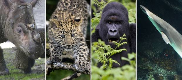 Earth on verge of sixth mass extinction 42